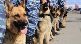 Кинологи назвали самые популярные в России породы собак