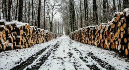 Ассоциация «Псковский лес» предлагает объявить охоту на «черных» лесорубов