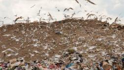 Прокуратура требует рекультивации земельного участка, занятого городской свалкой
