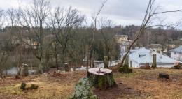 В Святогорском монастыре незаконно вырубили деревья возле могилы Пушкина
