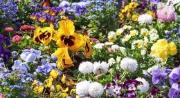 Итог весеннего месячника в Великих Луках: вывезено 2 262 кубометрамусора, посажено 16 577 цветов