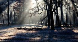 Запрет на посещение лесов введен в регионе