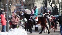Запретить выпас лошадей в парках предлагает парламентарий Алексей Фёдоров