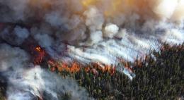 Воздушное судно для обнаружения лесных пожаров найметПсковская областьдо середины осени