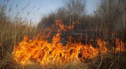 Первые палы сухой травы зарегистрированы в Псковской области