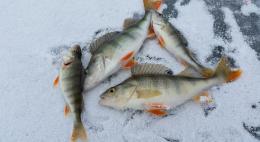 Соревнования по спортивному подледному лову рыбы пройдут на Чудском озере