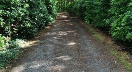 На участке автодороги «Раихино - Лисихино» не обеспечена необходимая видимость. что создает угрозу безопасности дорожного движения
