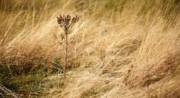 В целях пожаробезопасности вМинэкономразвитияпредложили изымать землю за мусор и нескошенную траву