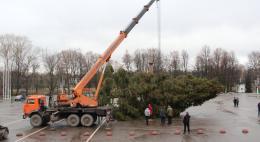 Сегодня в Великих луках установят главную елку, которую привезли из Куньинского района
