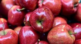 В Псковской области уничтожено 7 тонн яблок неизвестного происхождения