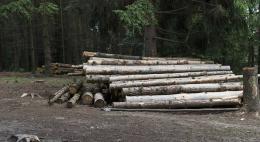Сообщить о незаконных рубках леса можнов диспетчерскую службу Комитета по природным ресурсам и экологии