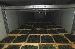 54 тонн томатов и 16 тонн огурцов не прошли контроль на российско-белорусской границе в Псковской области