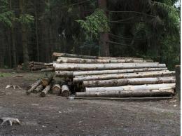 Почти 5 млн рублей заплатит компания «Техстрой» за незаконную рубку леса в Стругах Красных
