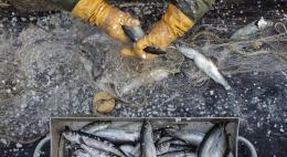 Перед КНДР поставили условие для разрешения промысла в российских водах