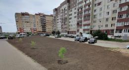 В Пскове в рамках акции «Сад памяти» благоустроили территорию по улице Балтийской
