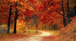 Псковскую область ждет обычная осень