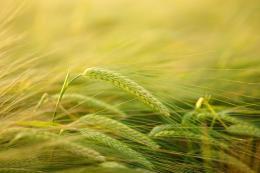 В Бежаницком районе в этом году освоили180 гектаров заброшенных земель