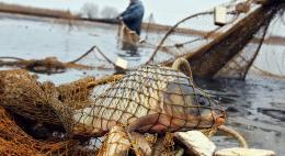 На прошлой неделе у браконьеров было изъято 13,5 кг рыбы