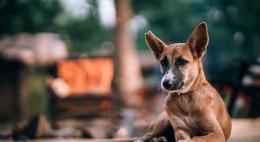 Приют для бездомных животных «Лесопилка» приглашает на субботник