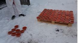 В Петербурге сожгли 4,5 тонны красной икры