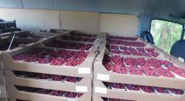 Управлением Россельхознадзора в Псковской области запрещён ввоз более 2,5 тонн ягод на территорию РФ