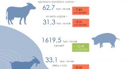 Поголовье скота в Псковской области на 1 августа 2021 года