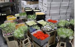 725 тонн цветов к Международному женскому дню перевезли через границу