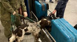 Служебные собаки Северо-Западного таможенного управления с начала года выявили 11 кг наркотиков