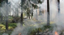 В Национальном парке «Себежский» ведется работа по предупреждению и тушению лесных пожаров