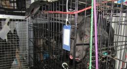 Домашние питомцы не смогли покинуть пределы РФ из-за нарушений ветеринарного законодательства