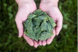 В Печорском районе высажено 8,6 тысяч деревьев в рамках акции «Сохраним лес»