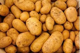 Управлением Россельхознадзора возвращены в Республику Беларусь 22 тонны картофеля