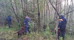 Четырех человек, потерявшихся в лесах, нашли сотрудники МЧС за сутки