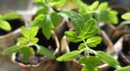 Россельхознадзор запретил ввоз более 113 000 цветов и зелени на территорию Псковской области из-за отсутствия маркировки
