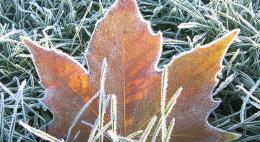 В ноябре МЧС прогнозирует погоду в пределах нормы