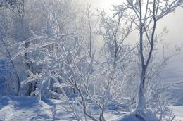 В ряде регионов России прогнозируется аномальный холод