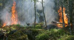 В Псковской области отменили противопожарный режим