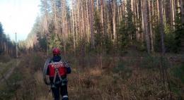 В Псковской области восстановлена основная линия электросети