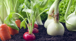 Псковские аграрии поделиллисьтехнологиями выращивания разного вида овощей, ихзащиты иудобрения